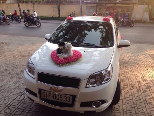 Xe-Cuoi-Chevrolet-Cruze-06
